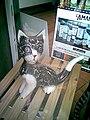 Gatto di legno.JPG