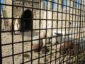 Genova-Castello d'Albertis-DSCF5445.JPG