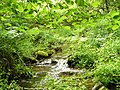 Gentle stream - geograph.org.uk - 1367114.jpg