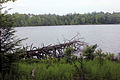 Gfp-pennsylvania-promised-land-state-park-fallen-tree-by-lake.jpg
