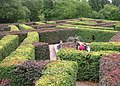 Giant maze on the Scone Palace grounds - geograph.org.uk - 1459588.jpg
