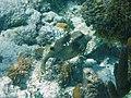 Glover's Reef 2-15 (33177394092).jpg