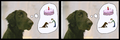 Gordie want birthday cake stereographic parallel.png