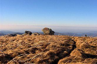 Appalachian balds - Grassy Ridge Bald in the Roan Highlands