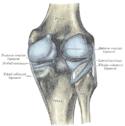 Højre knæs ledkapsel, bagside.