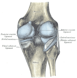 Articular capsule of the knee joint wikipedia capsule of right knee joint distended posterior aspect ccuart Image collections