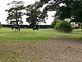 Grazing quietly - geograph.org.uk - 1048774.jpg