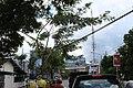 Grindulu Fm - panoramio.jpg