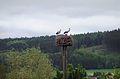Grosses Torfmoor Storchenpaar.jpg