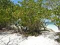 Guadeloupe - panoramio - georama (16).jpg