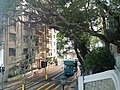 HKU 港大 near 香港島 半山區 Mid-Levels 般咸道 Bonham Road 老榕樹 old banyan trees May 2018 LGM 02.jpg