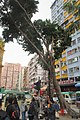 HK 觀塘 Kwun Tong 協和道 Hip Wo Street Mut Wah Street tree morning Dec 2018 IX2 facades.jpg