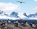HMS Endurance patrolling off the Antarctic as penguins look on. MOD 45147622.jpg