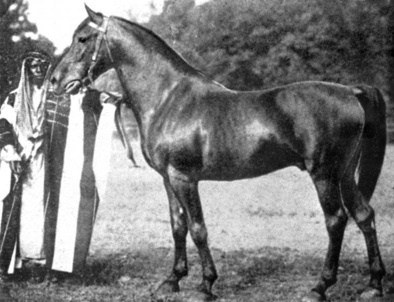 Haleb 1908