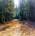Hall's Creek Trail Moncton (22360699713).jpg