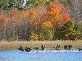 Ham Lake, MN 55304, USA - panoramio (24).jpg