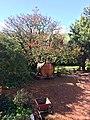 Hartenberg Wine Estate, Stellenbosch, South Africa.jpg