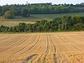 Harvested farmland, Checkendon - geograph.org.uk - 977151.jpg