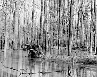 Richland County, South Carolina - Harvesting red gum trees in Richland County, 1904