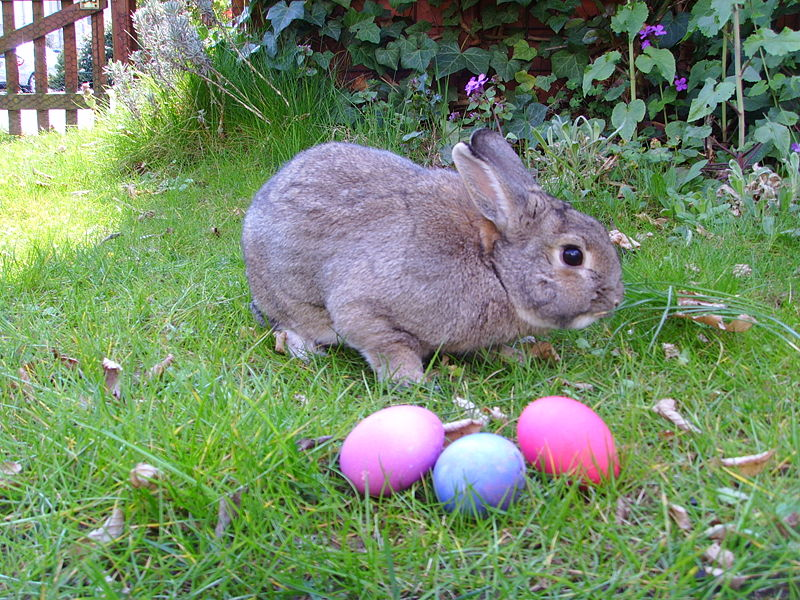 Domestic rabbit and 3 easter eggs from Germany by Gerbil
