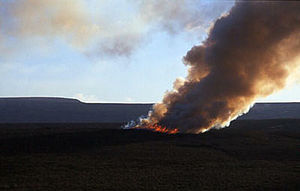 Red grouse - Controlled burning of heather, on a Derbyshire grouse moor.
