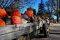 Heritage Pumpkins.jpg