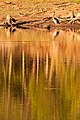 Heron at Quaker Creek - panoramio.jpg