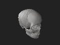 High quality skull.stl