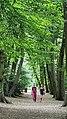Highgate Wood 20170623 152328 (49400812231).jpg