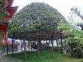 Hogonji0064.JPG