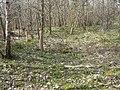 Homewood, Sedgwick park - geograph.org.uk - 385709.jpg