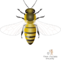 Honeybee by togopic.png