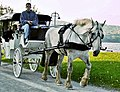 Horse and carriage-Duluth-2006.jpg