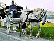Horse and carriage-Duluth-2006