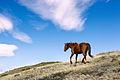 Horse in Torres Del Paine.jpg