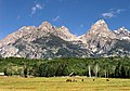 Horses In The Tetons (245997065).jpeg
