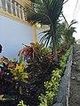 Hostal Palmeras Playa Milina - panoramio (3).jpg