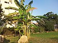 Hotel Arsinoe - panoramio.jpg
