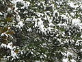 Huazhong University of Science and Technology - subtropical plants under snow - P1050015.JPG