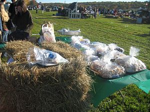 Far Hills Races - Event guests set up their picnics, prior to the 2008 race
