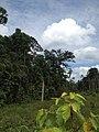 Hutan Alam Mandi Angin Minas Riau 02.jpg
