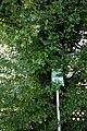 ID 717 Weißdorn Lafnitz 0003.jpg