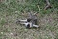 Ik geef mij over apen in Gambia.jpg