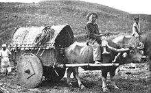 Ilocano people - Wikipedia