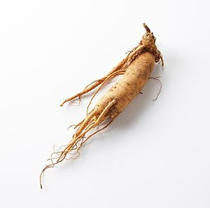 Ginseng - an Asian ginseng root