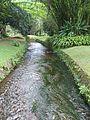 Jardim Botânico Rio de Janeiro.jpg