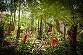 Jardim de bromélias.jpg