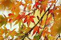 Jardin japonais Toulouse (8603308236).jpg