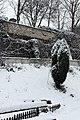 Jardin naturel (Paris) sous la neige 18.jpg