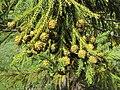 Jawaharlal Nehru Memorial Botanical Gardens, Srinagar 31.JPG